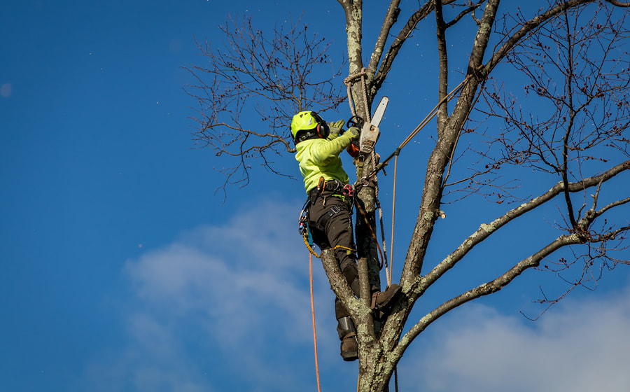 reliable tree care expert during work