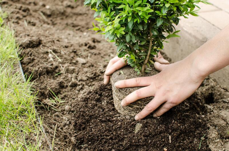 professional tree planting service